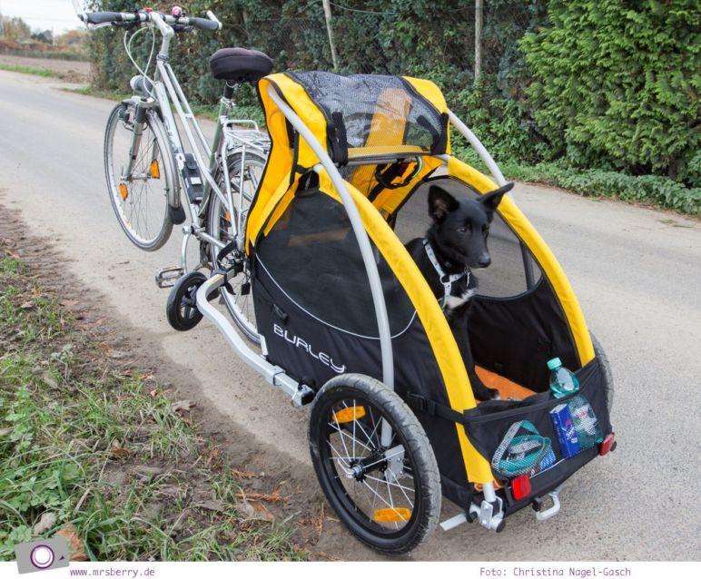 fahrradfahren mit hund der hundeanh nger von burley. Black Bedroom Furniture Sets. Home Design Ideas