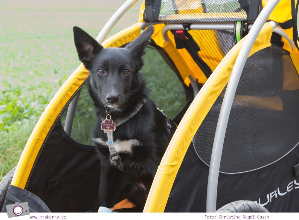 Fahrradanhänger für Hunde / Hundeanhänger - Burley Tail Wagon
