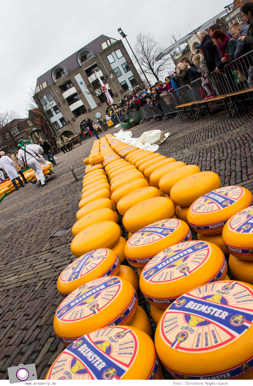 Käsemarkt in Alkmaar: vom Setzer perfekt gestapelte Käselaibe auf dem Marktplatz