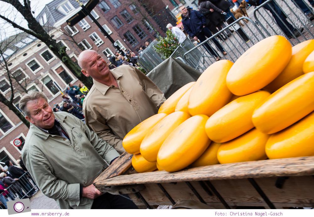 Käsemarkt in Alkmaar: Mit dem Schubkarren bringen die Käseträger den Käse zum LKW