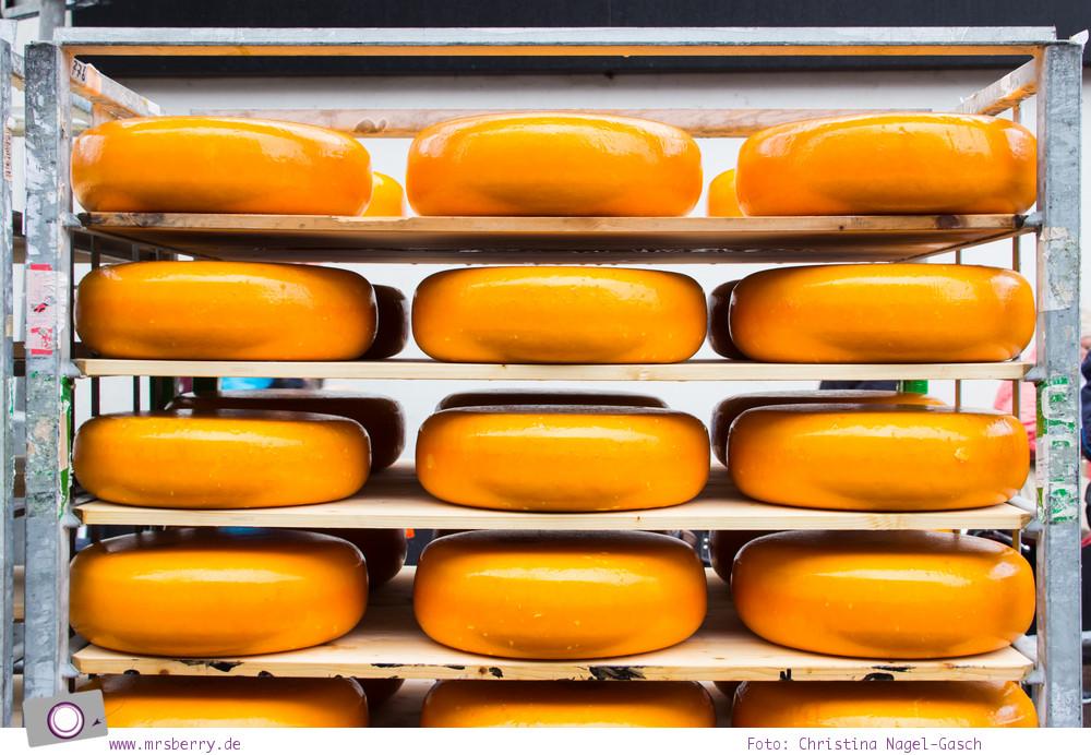 Käsemarkt in Alkmaar: Käselaibe - das gelbe Gold von Alkmaar