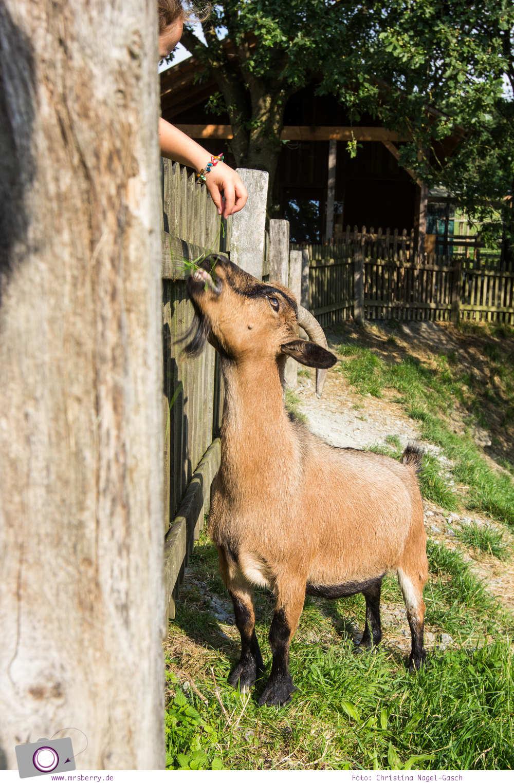 Urlaub im Sauerland - Familotel Ebbinghof in Schmallenberg: Streichelzoo mit Ziegen