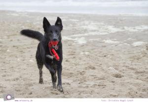 Urlaub auf Texel mit Kind und Hund - mit Hund am Strand