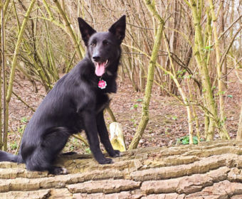 Zecken - richtige Vorsorge gegen Blutsauger (immer draußen in der Natur mit Hund Maya)