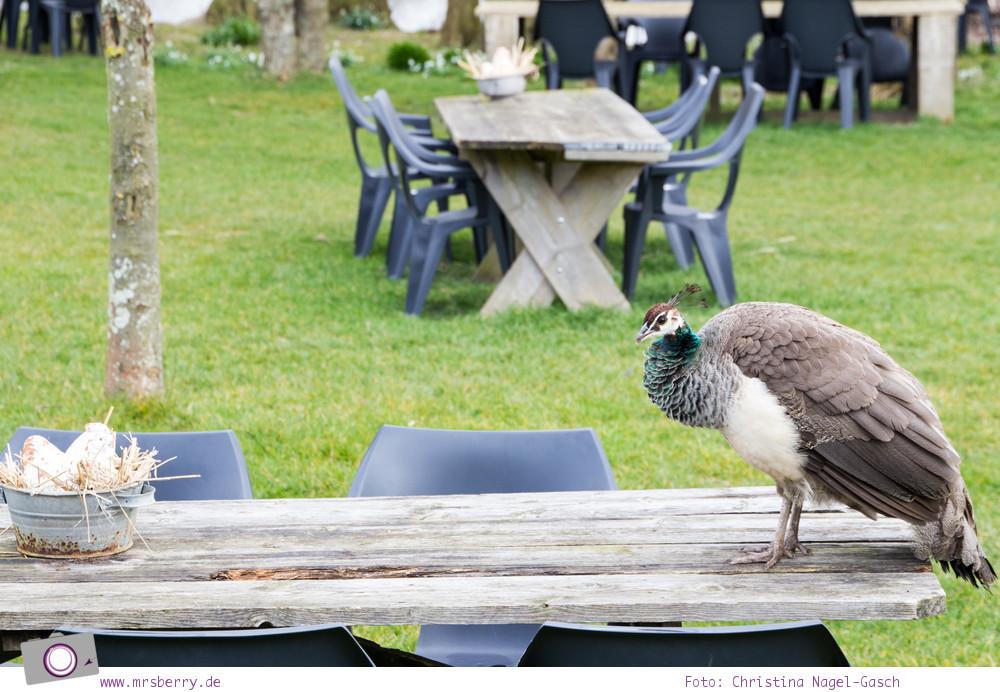 Urlaub auf Texel mit Kind und Hund - Landgut De Bonte Belevenis