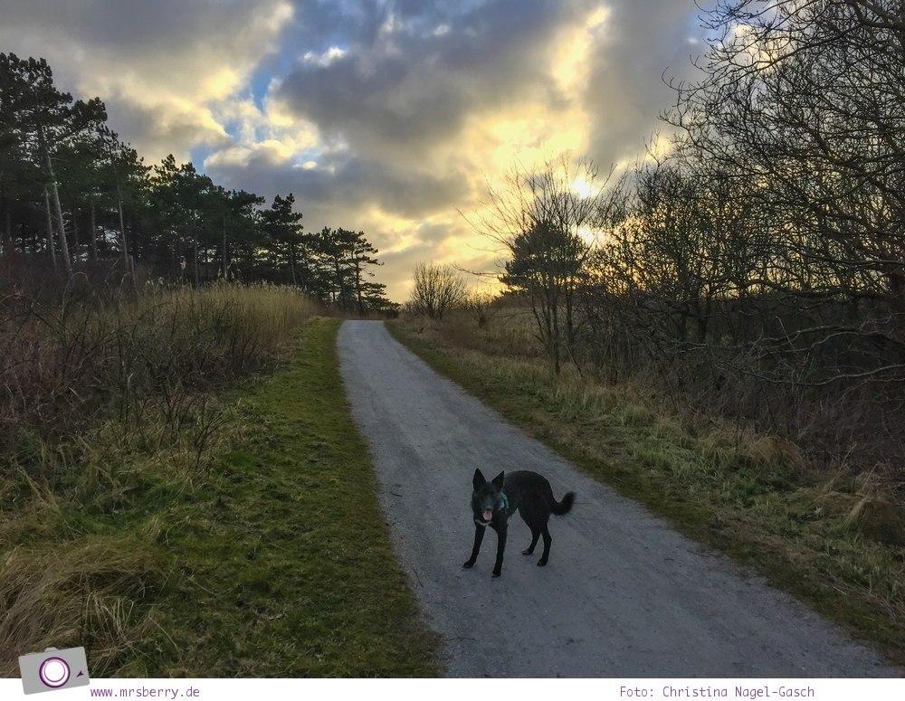 Urlaub auf Texel mit Kind und Hund -  Nationalpark Dünen von Texel