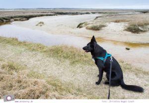 Urlaub auf Texel mit Kind und Hund - Naturschutzgebiet De Slufter