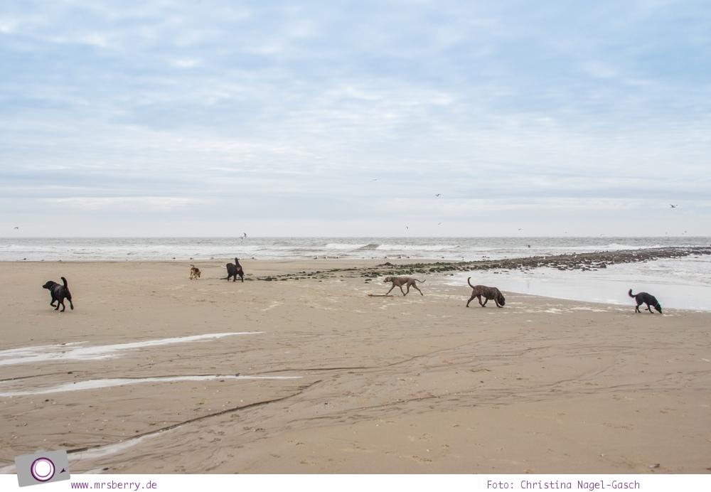 Urlaub auf Texel mit Kind und Hund -  Rudelwanderung mit Jos Osting am Strand von Texel Paal 9