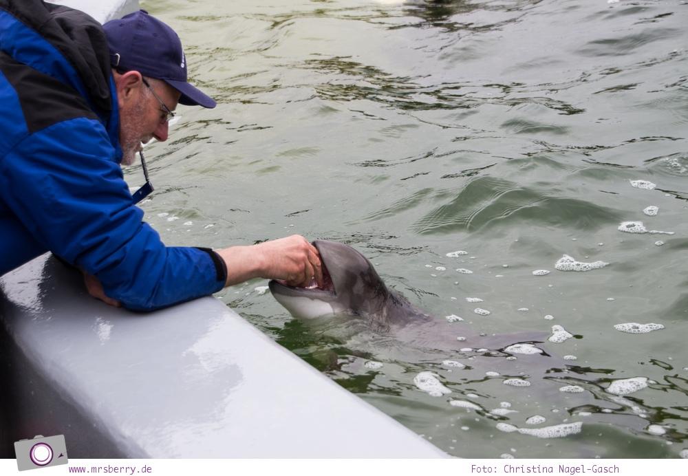 Urlaub auf Texel mit Kind und Hund - Besuch der Ecomare Seehundstation