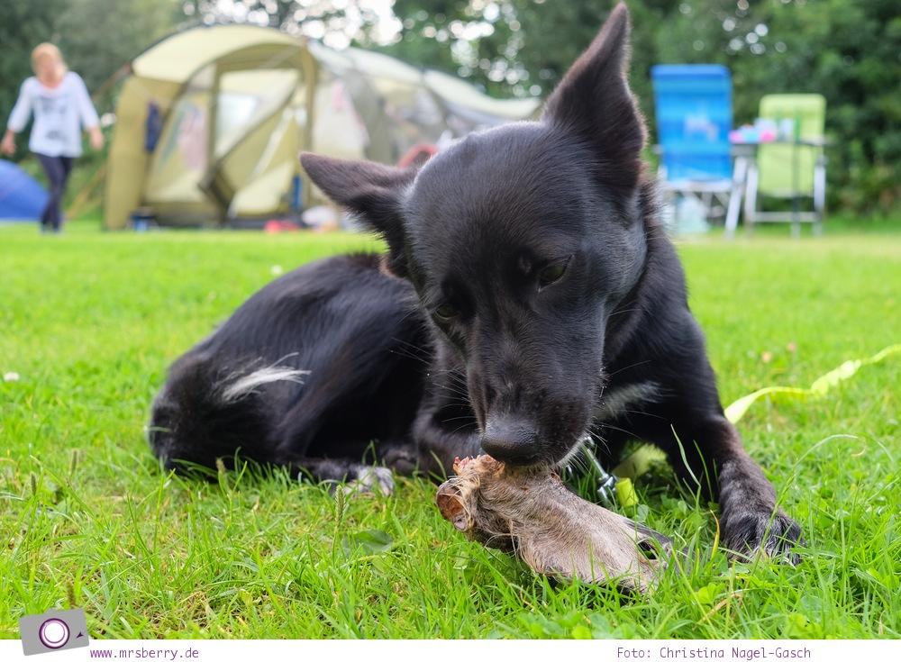 Camping an der Nordsee - mit Zelten Kind und Hund im Nordsee-Camp in Norddeich