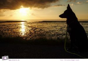 Camping an der Nordsee - mit Zelten Kind und Hund im Nordsee-Camp in Norddeich: Sonnenuntergang über der Nordsee
