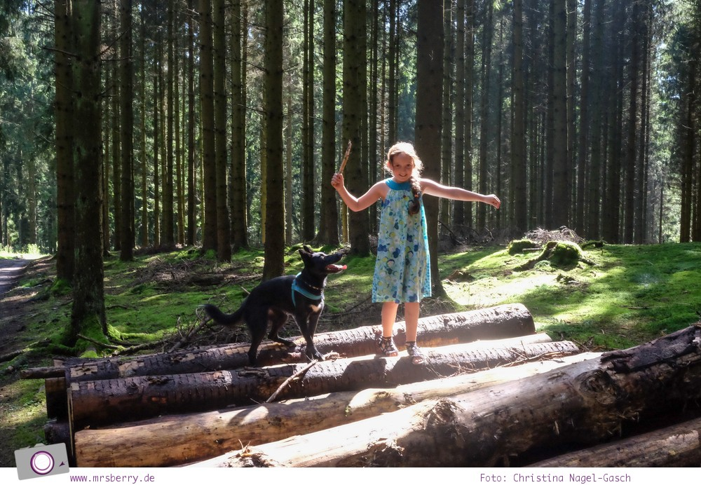 Biggesee im Sauerland - ein Tagesausflug mit Kind und Hund | Weg zur Aussichtsplattform Biggeblick