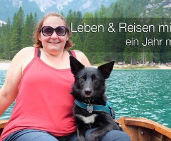 Leben und Reisen mit Hund - 1 Jahr mit Maya #dogcontent