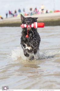 Norddeich: 16 Freizeittipps für Familien an der Nordsee - Hundestrand