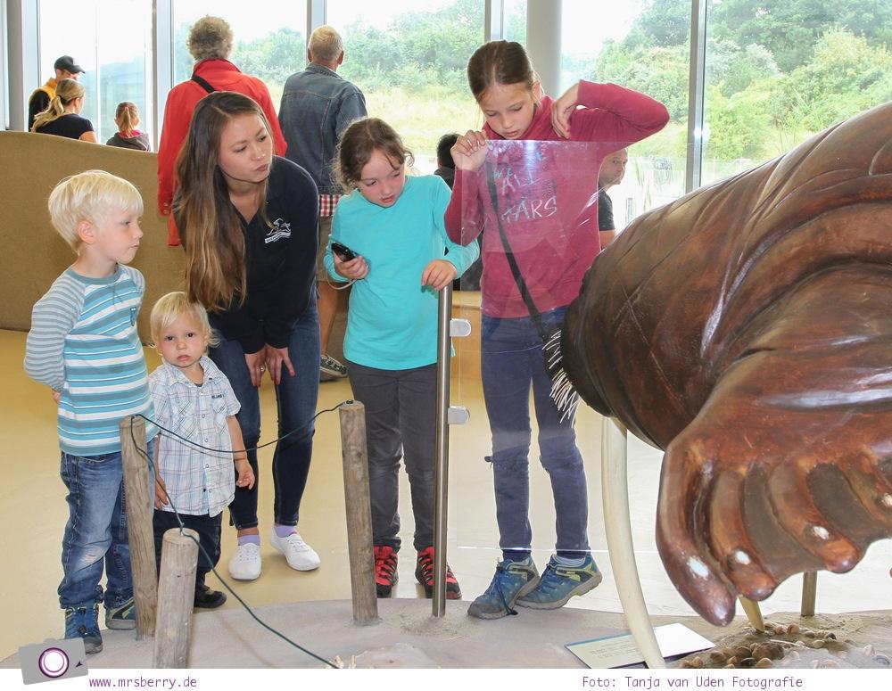 Norddeich: 16 Freizeittipps für Familien an der Nordsee - Seehundstation