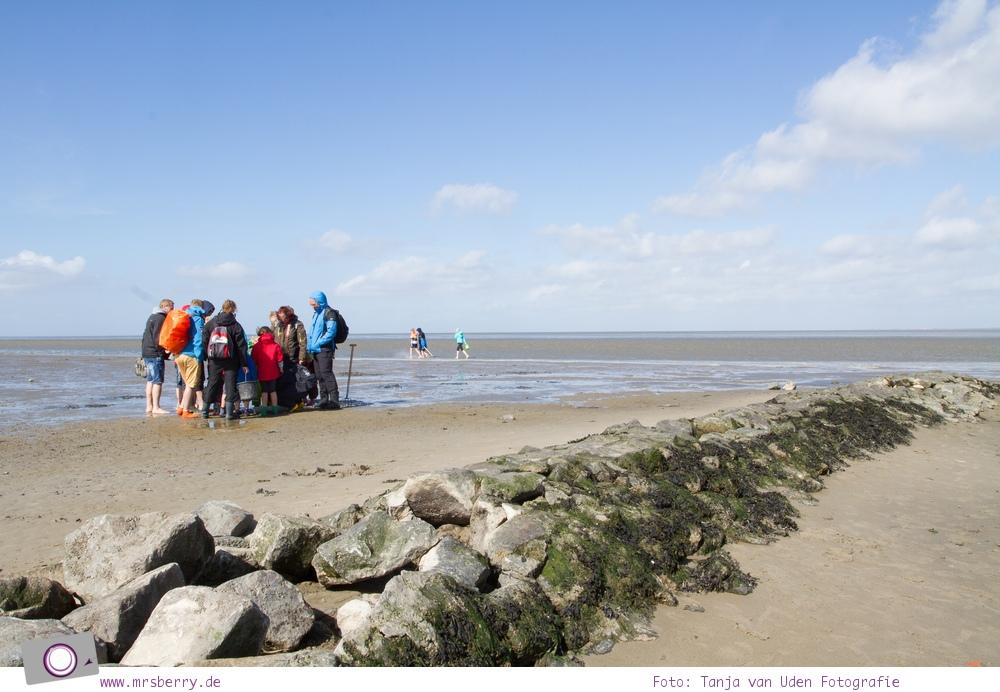Norddeich: 16 Freizeittipps für Familien an der Nordsee - Watt für Zwerge - Wattführung für Kinder