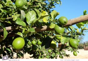 Ibiza mit Kindern - Reisebericht mit Tipps für die Region Santa Eularia: Öko-Finca Can Musson