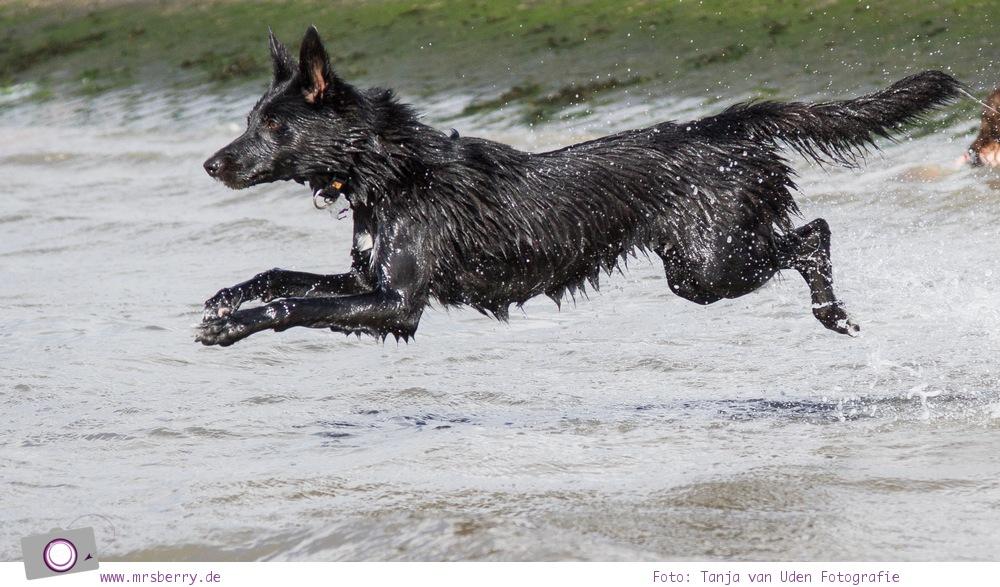 Nordsee Urlaub in Norddeich - Hund Maya am Hundestrand