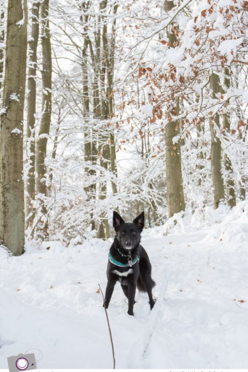 Winter in der Eifel: Rodeln am Michelsberg in Bad Münstereifel