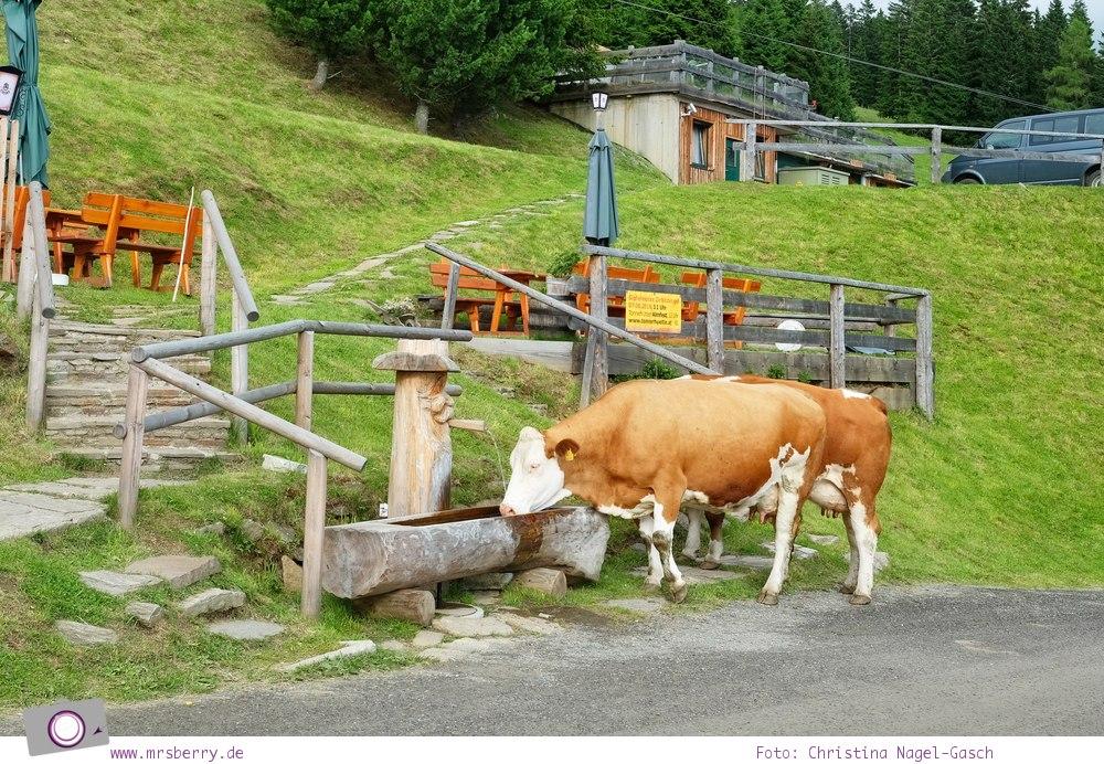 Urlaub Zirbitzkogel in der Steiermark - Wandern mit Kind und Hund | Aussicht Kuh-geleit an der Tonnerhütte
