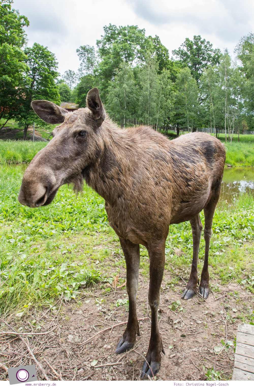 Schweden mit Kindern - Tipps für Småland in Südschweden: Ausflug zum Malilla Elchpark
