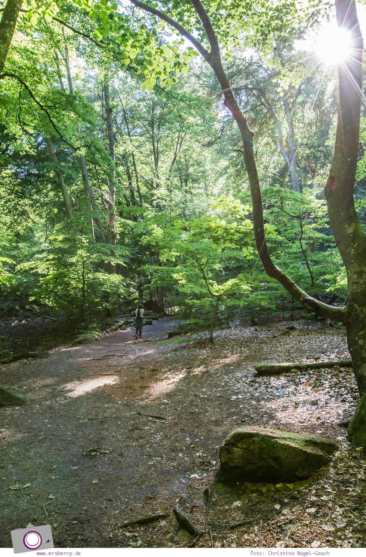 Schweden mit Kindern - Tipps für Skåne län in Südschweden: Ausflug zum Söderasen Nationalpark