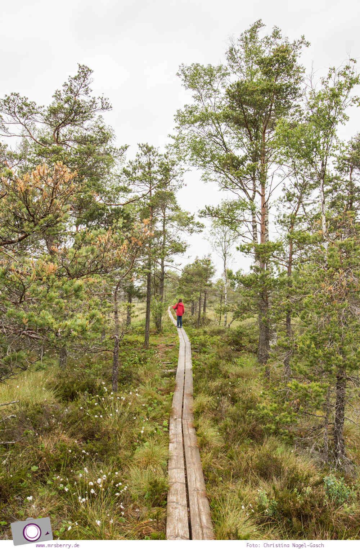 Schweden mit Kindern - Tipps für Småland in Südschweden: Ausflug in den Store Mosse Nationalpark