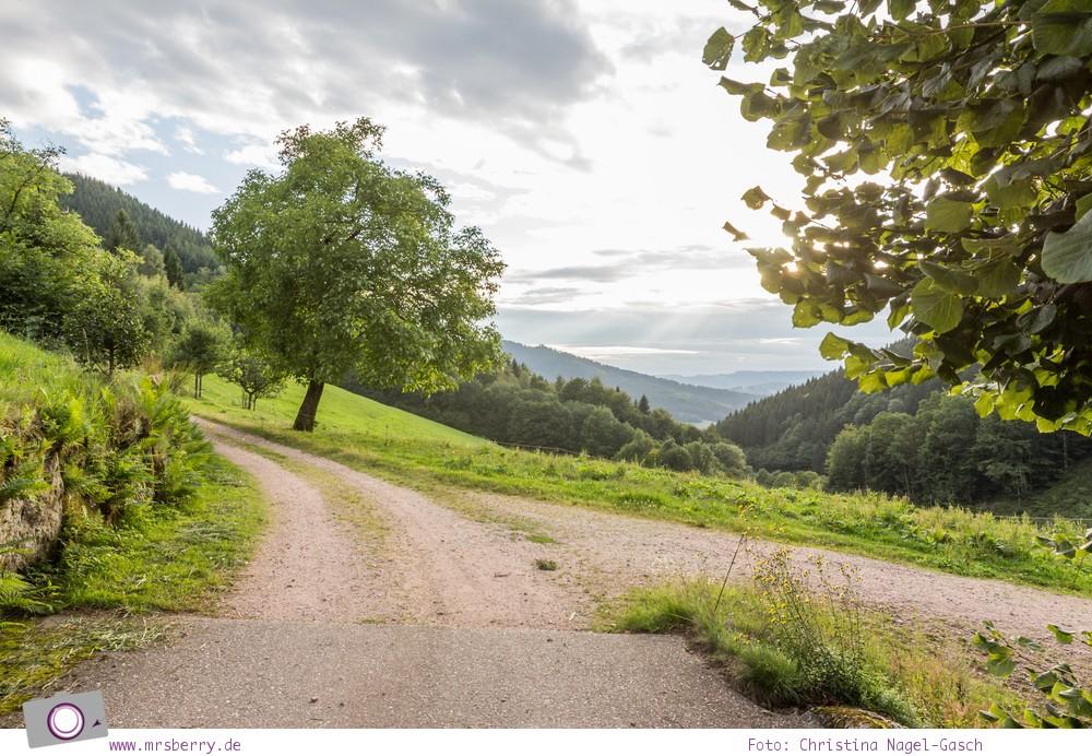 ZweiTälerLand: Familienurlaub im Schwarzwald - ein perfektes Reiseziel zum Wandern
