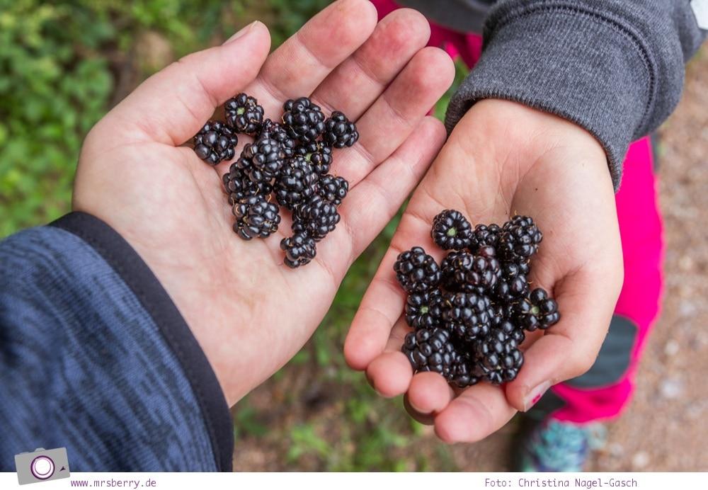 ZweiTälerLand im Schwarzwald: Wandern mit Kind zu den Siebenfelsen. Unterwegs sammeln wir reife Brombeeren.