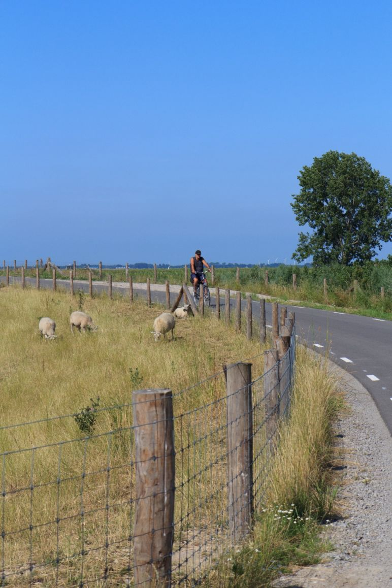 Familienurlaub in den Niederlanden - Cycling quiet roads | Bild: Boat Bike Tours