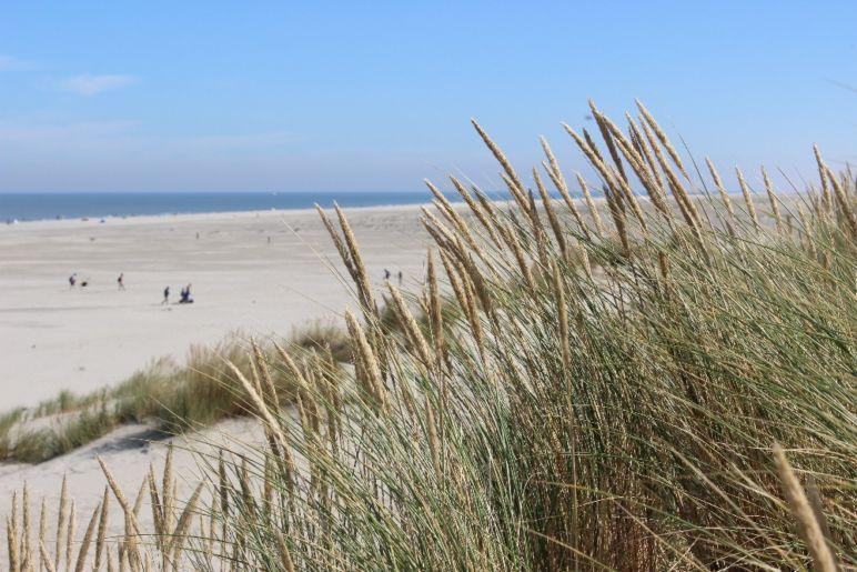 Familienurlaub in den Niederlanden - North Sea Beach | Bild: Boat Bike Tours