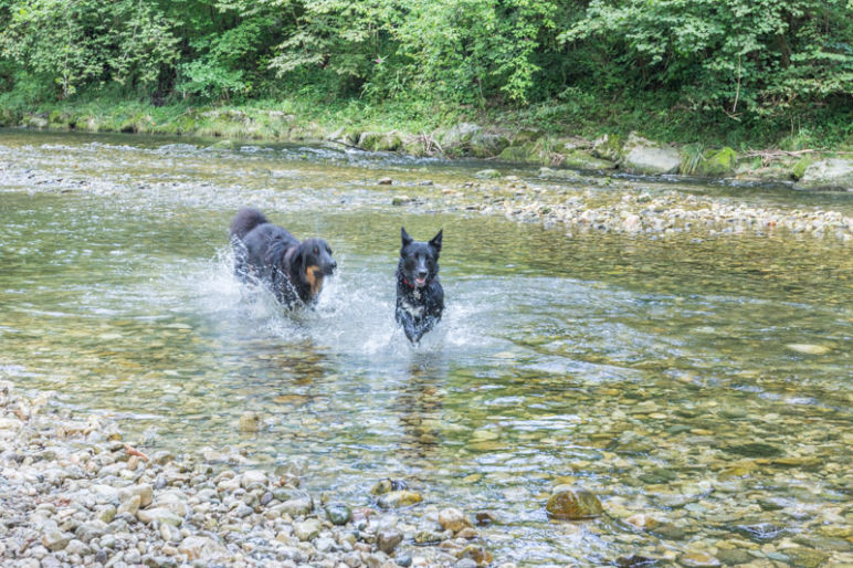 Prien am Chiemsee: Tipps für den Familienurlaub in Bayern vom MrsBerry Familien-Reiseblog | Spaziergang mit Hund an der Prien.