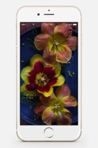 Wallpaper MrsBerry.de Tulpen Dark Moody Fotografie