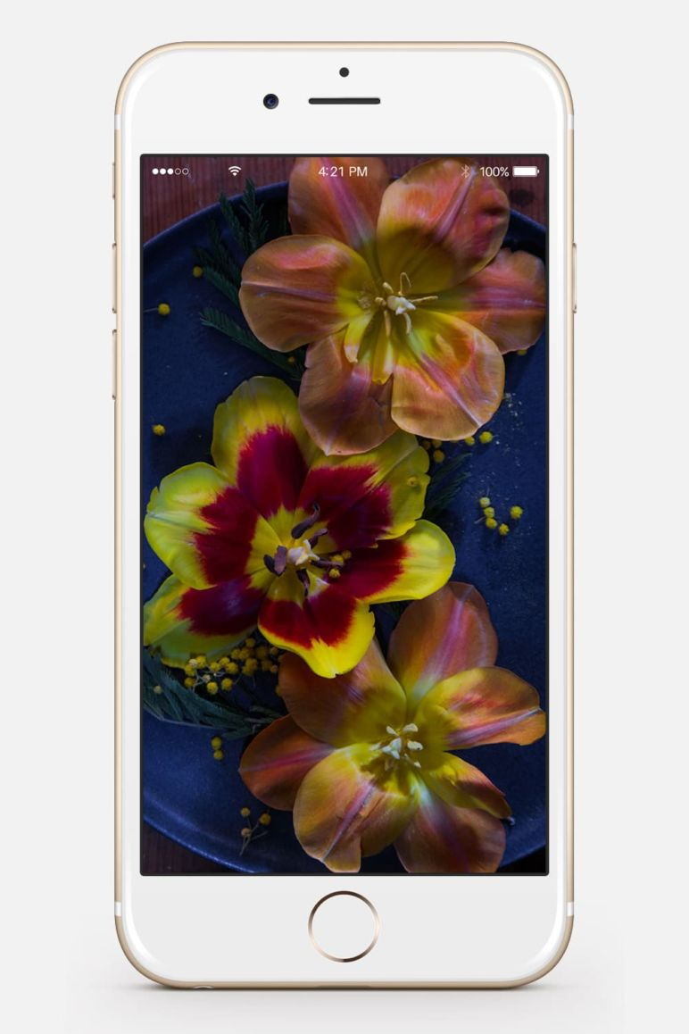 Wallpaper MrsBerry.de Tulpen Dark Moody Fotografie