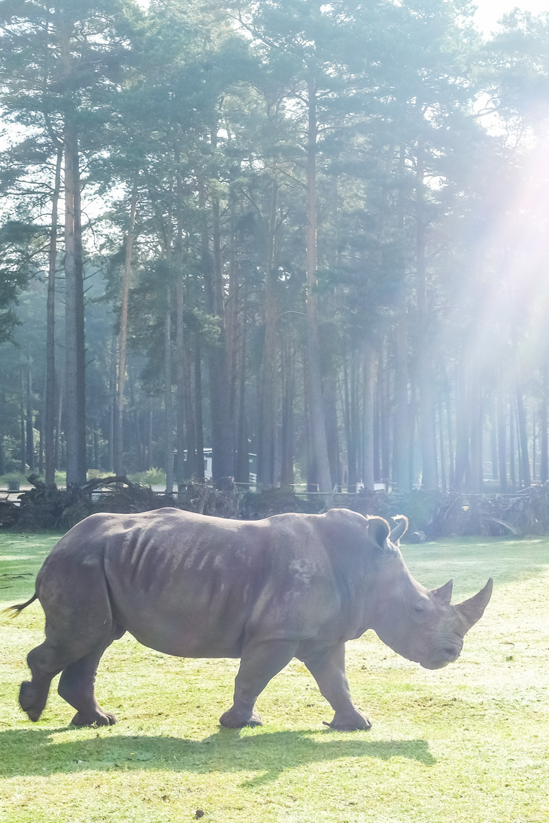 Auf Safari in Niedersachen – Serengeti Park Hodenhagen