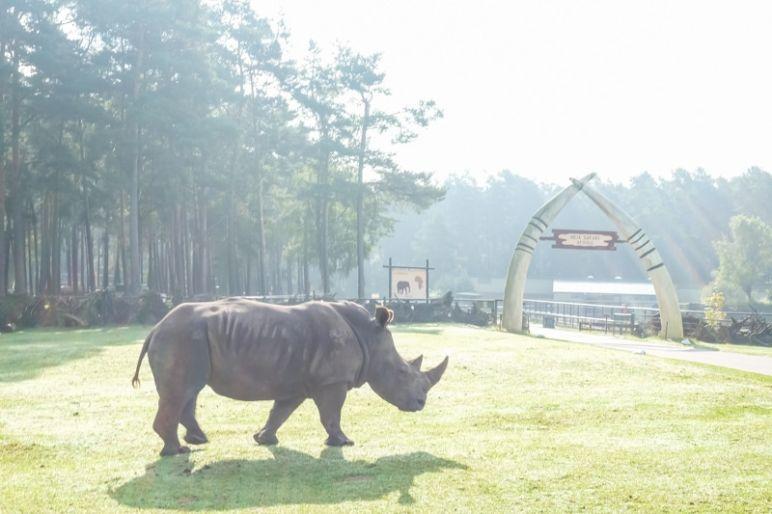 Safari in Niedersachen - Ein Wochenende im Serengeti Park Hodenhagen in der Lüneburger Heide