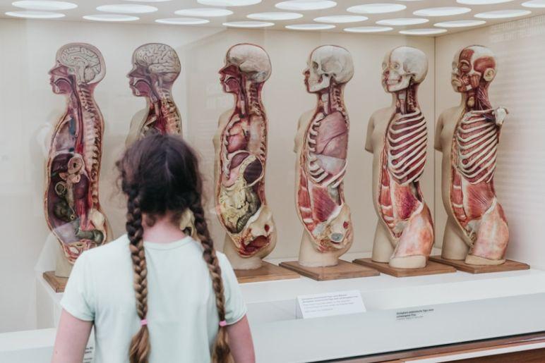 Städtereise Dresden Sehenswürdigkeiten - Zerlegbare anatomische Figur einer schwangeren Frau im Deutschen Hygiene-Museum Dresden.
