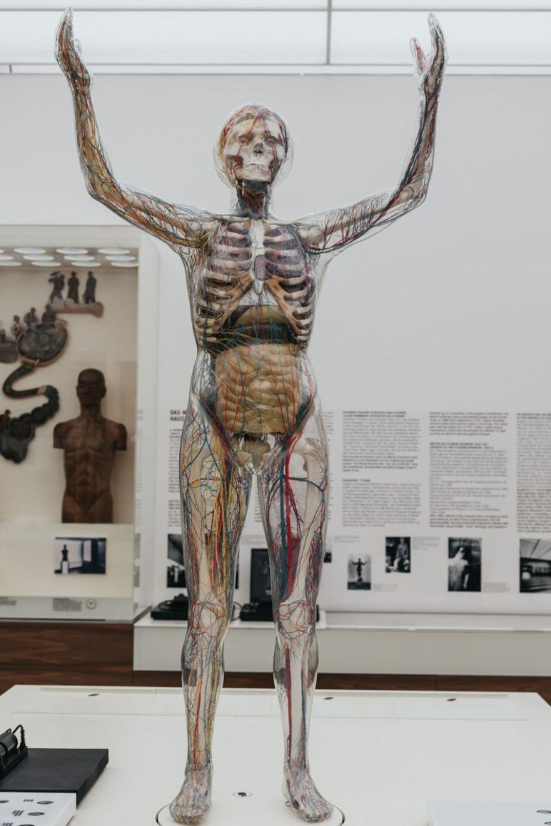 Städtereise Dresden Sehenswürdigkeiten - Die Gläserne Frau, ein Anatomisches Modell, im Deutschen Hygiene-Museum Dresden.