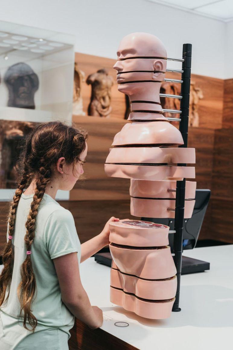 Städtereise Dresden Sehenswürdigkeiten - Anatomisches Modell, Scheibentorso, im Deutschen Hygiene-Museum Dresden.