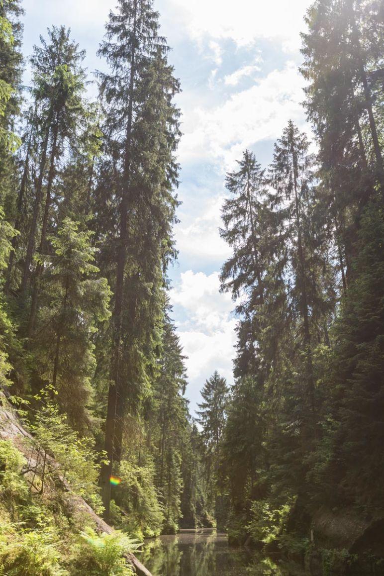 Sächsische Schweiz: Familienurlaub in Hinterhermsdorf - Nationalpark Familien-Wanderung Obere Schleuse