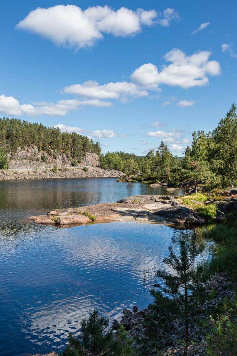 Skandinavien Roadtrip: Tipps zu unserer Rückreise von Norwegen nach Deutschland über Dänemark - Die unberührte Natur Norwegens lädt zum Blaubeeren sammeln ein.